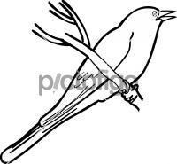 Dark Billed CuckooFreehand Image
