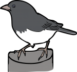 Dark Eyed Junco freehand drawings