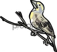 DickcisselFreehand Image