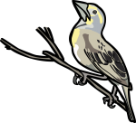 Dickcissel freehand drawings