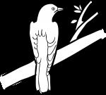 Diederick Cuckoo freehand drawings