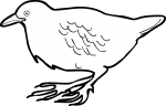 Dot  Winged Crake freehand drawings