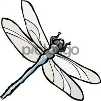 DragonflyFreehand Image