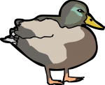 Duck freehand drawings