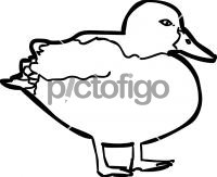 DuckFreehand Image