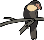 Dusky Broadbill freehand drawings