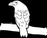 Dusky Broadbill freehand drawings