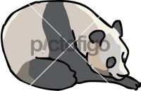 Giant PandaFreehand Image