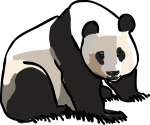 Giant Panda freehand drawings