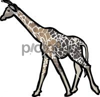 GiraffeFreehand Image