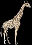 Giraffe freehand drawings