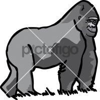 GorillaFreehand Image