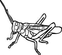GrasshopperFreehand Image