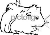 GuineaFreehand Image