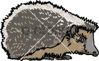 HedgehogFreehand Image