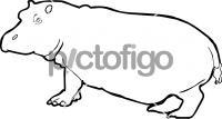 HippopotamusFreehand Image