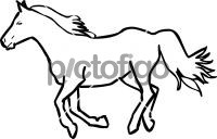 HorseFreehand Image