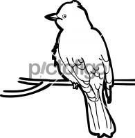 Eastern KingbirdFreehand Image