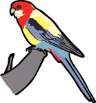 Eastern Rosella freehand drawings