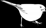 Eastern Towhee freehand drawings