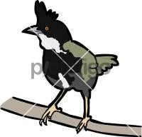 Eastern WhipbirdFreehand Image