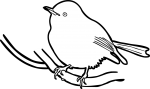 Eastern Yellow Robin freehand drawings