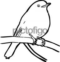Eastern Yellow RobinFreehand Image