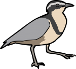 Egyptian Plover freehand drawings