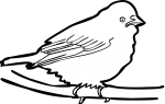 Elegant Euphonia freehand drawings