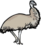 Emu freehand drawings