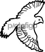 FalconFreehand Image