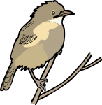 Fan Tailed Warbler freehand drawings