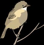 Fan Tailed Warbler