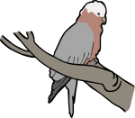Galah freehand drawings