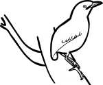 Garnet Pitta