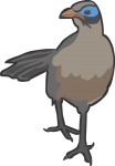Giant Coua freehand drawings