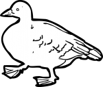 Goose freehand drawings