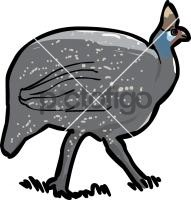 Guinea FowlFreehand Image