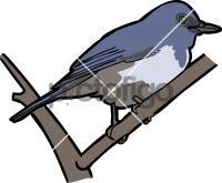 Hainan Blue Flycatcher