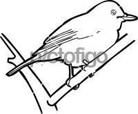 Hainan Blue FlycatcherFreehand Image