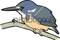 Half Collared KingfisherFreehand Image