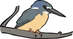 Half Collared Kingfisher freehand drawings