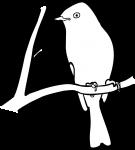 Hammonds Flycatcher freehand drawings