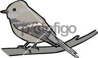 Hammonds FlycatcherFreehand Image