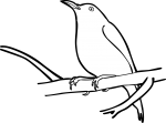 Handsome Sunbird freehand drawings