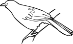 Hartlaubs Babbler freehand drawings