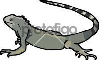 IguanaFreehand Image