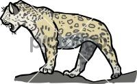 JaguarFreehand Image