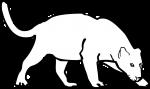 Jaguar freehand drawings