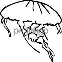 JellyfishFreehand Image